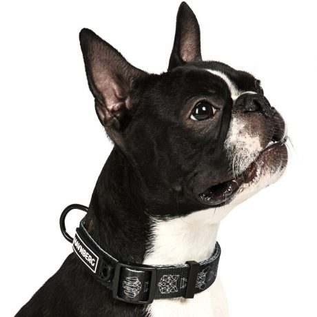 Schönes Hundehalsband im schwarzen Geodog Design