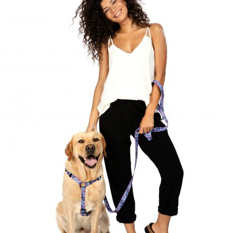 Lila Hundegeschirr Set mit Leine Golden Retriever HAVNBERG