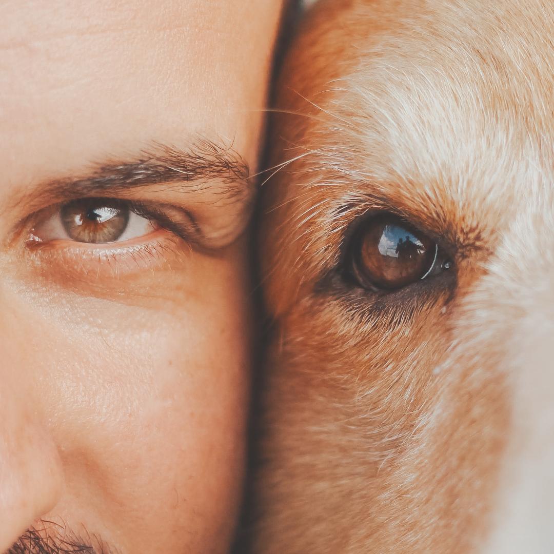 Ein Hund ist Balsam für die Seele