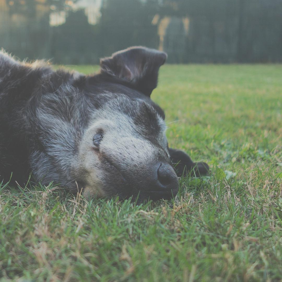 gras-fressen-hund