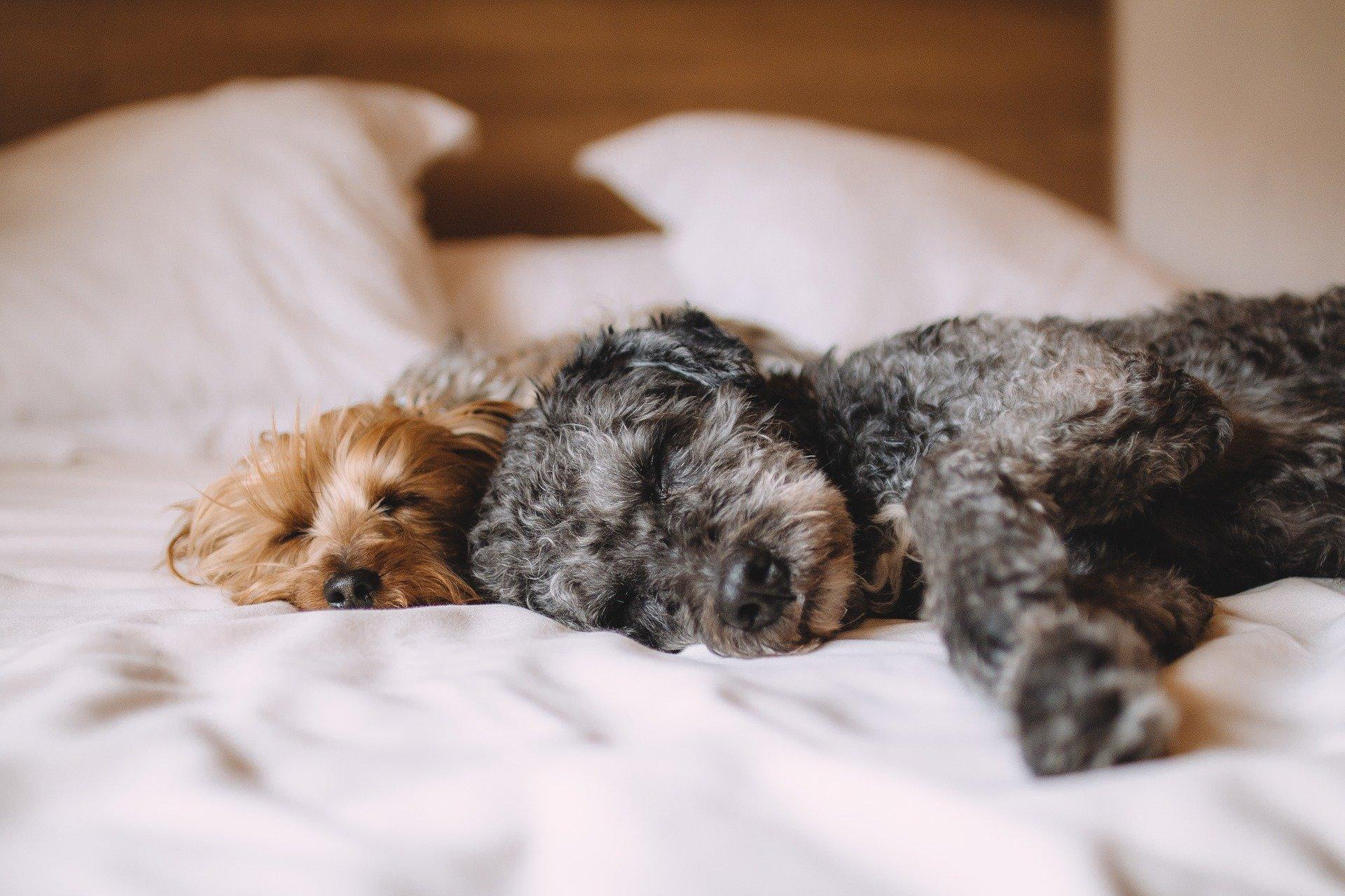 Hunde schlafen anders